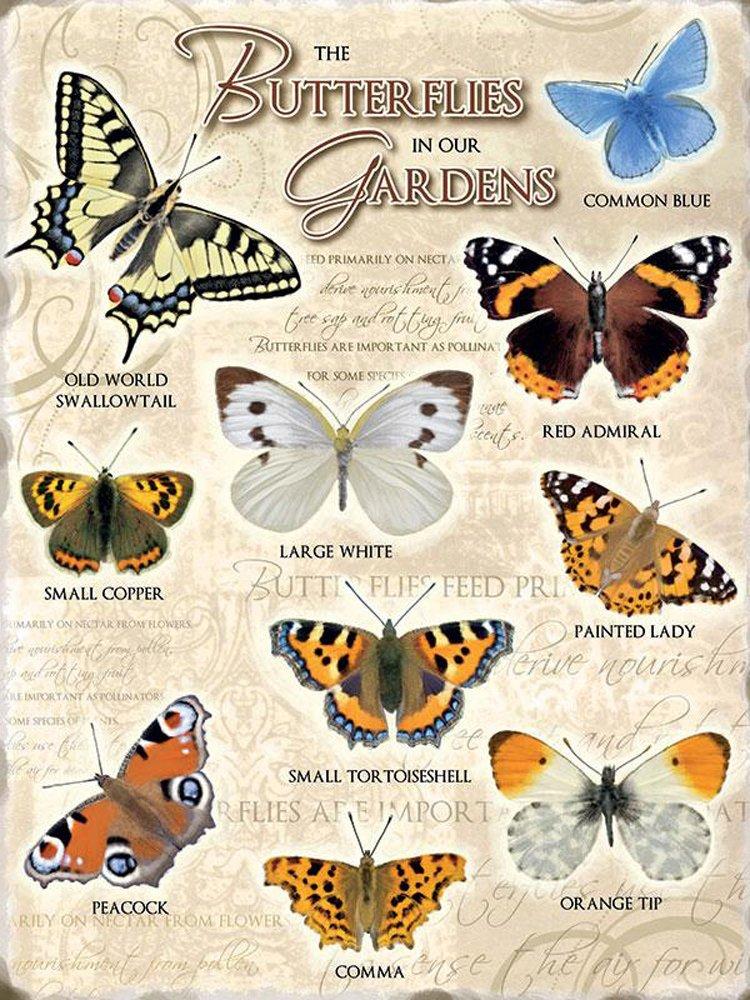 Garden-Butterflies-Metal-Wall-Sign